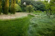 Mariani Landscape - Lake Forest, IL Someday I'll get our native plantings to look like this.