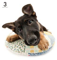 Artlist Collection THE DOG German Shepherd Dog