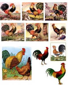 Free Printable Rooster | Free Digital Downloads by The Timeless Garden: Free Digital Rooster ...