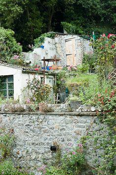 Sherborne Lane (my great aunts garden), Lyme Regis, Dorset