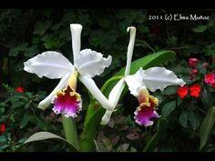 Otros abonos caseros de gran utilidad para las orquideas - Orquideas del Peru