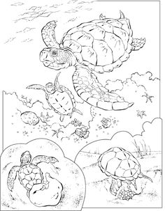 dip coloring pages | Ocean Animals coloring pages for kids | Coloring Pages ...