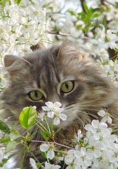 (A través de tiempo Take & hellip; mascotas .para un gato | ❀ Primavera Dulzura ❀ | Pinterest)