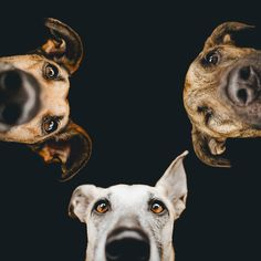 Expressive Dog Portraits by Elke Vogelsang Perfectly Capture Man's Best Friend Funny Dogs, Funny Animals, Cute Animals, I Love Dogs, Cute Dogs, Photo Animaliere, Tier Fotos, Dog Portraits, Dog Photos