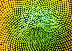 VIDEO: Inhabitat Interviews Janine Benyus, Biologist and Founder of The Biomimicry Institute | Inhabitat - Green Design, Innovation, Architecture, Green Building