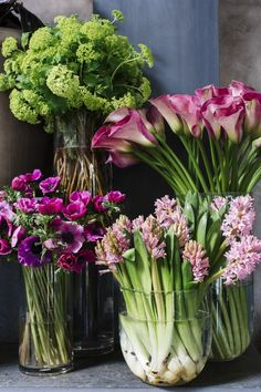 Green viburnum, plum calla lilies, petal pink hyacinths, and fuchsia anemones are classic flowers to be found in Winston Flowers' Valentine's Day Collection.