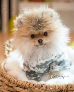 Always keep your Cat Happy & Healthy Win a $1000 Gift Card - 100% free Pet Food for one year! Click here http://DogsDogsBaby.us/GiftCard #pomeranian