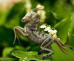 Zoologie hybride et nouvelles espèces d\'animaux