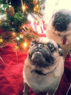 """""""Wait...omg...is there food on this tree?!?"""""""