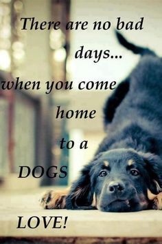 Not really true with my dogs -- coming home to a scratched up wall, a ripped up window screen, a destroyed door makes for a bad day...BUT. I still love dem.