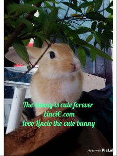 Hi the bunny is cute