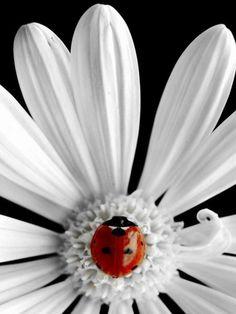 Lady bug, lil cochinelle www.facebook.com/loveswish