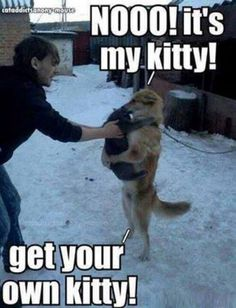 Get your own, human! Pretty sure my dog would do this if he thought his kitties were threatened. :)
