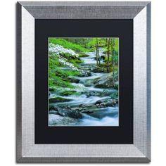 Trademark Fine Art Flowering Dogwood Canvas Art by Michael Blanchette Photography Black Matte, Silver Frame, Assorted