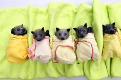 Lil bat babies that sorta look like my dog. weird... BUT CUTE!!!