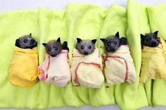 Lil bat babies that sorta look like my dog. weird... BUT CUTE!!!