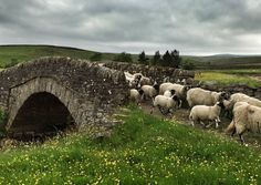 """pagewoman: """" Packhorse Bridge, Swaledale, North Yorkshire, England by Amanda Owen """" Yorkshire Dales, Yorkshire England, North Yorkshire, Cornwall England, Landscape Photography, Nature Photography, British Countryside, England And Scotland, Lake District"""