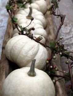 kürbiss reihe elegante ideen für herbstdeko in weiß