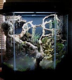 Tokay Gecko terrarium *not my design