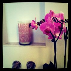 orchid love.