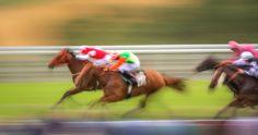 free screensaver wallpapers for horse racing, 4306x2277 (628 kB)