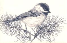 Pencil Drawings A pencil sketch of a Carolina Chickadee (by Kelly Riccetti) Bird Drawings, Pencil Art Drawings, Cartoon Drawings, Animal Drawings, Drawing Birds, Pencil Sketching, Drawing Faces, Realistic Drawings, Animal Sketches