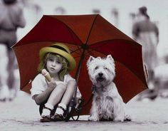 Westies are simply the best!