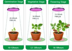 how long will it works in the different stages of the plants Growing Plants Indoors, Grow Lights For Plants, Led Grow Lights, Hydroponics System, Aquaponics, Hydroponic Vegetables, Compost, Houseplants, Indoor Plants