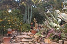 A fabulous sanctuary of succulents, cacti and citrus trees along stacked stone walls. Stacked Stone Walls, Top Imagem, Valencia Orange, Succulent Landscaping, Citrus Trees, Moon Garden, Desert Plants, Flagstone, Save Water