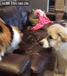 "What'd you call me?   The poor dog is like, ""what just happened?"""