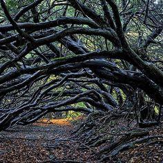 """""""Árvores são a infindável ânsia da terra por falar aos céus que ouvem"""" Rabindranath Tagore  A árvore é um arquétipo bem presente no imaginário dos povos:  Para judeus e cristãos as árvores do paraíso frutificam com conhecimento e vida eterna.  Para os muçulmanos a árvore do paraíso cobre as nações com suas folhas e delimita em seus confins o conhecimento das criaturas.  Nas antigas histórias nórdicas e indígenas da américa todos os mundos são interligados por uma árvore.  Foi sob uma árvore…"""