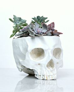 Skull Planter Large Size White