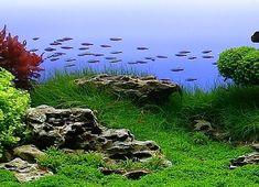 Bubbles Aquarium - Aquascapes (2008 Aquascaping Gallery)