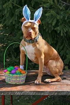 Happy Easter! http://www.thelazypitbull.com/2012/04/thank-you-easter-bully.html