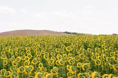did you know that sunflowers always face the sun? THEY ARE NOTICING THE LIGHT in every moment of their lives!