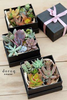 【doroq多肉植物馆】首次线下售卖活动(10月29日)