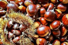 Filename: autumn, chestnut, food, season wallpaper Resolution: File size: 523 kB Uploaded: - Date: Conservation Des Chataignes, Superfoods, Blog Bio, Allergies Alimentaires, 5 Tastes, American Chestnut, Diy Body Scrub, Vitamins For Women, Fruit Smoothies