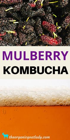 Are you looking for a great way to use up those extra mulberries? Do you love kombucha? Then you definitely need to make mulberry kombucha! Yummy, fruity, fizzy goodness in a bottle:) Best Kombucha, Make Your Own Kombucha, Kombucha Flavors, How To Brew Kombucha, Kombucha Recipe, Probiotic Foods, Fermented Foods, Fermentation Recipes, Homebrew Recipes