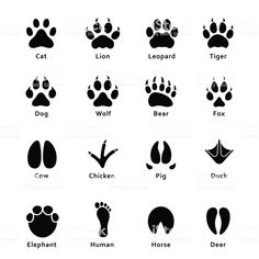 Animals footprints, paw prints. Set of different animals and birds footprints and traces. Cat, lion, tiger, bear, dog, cow, pig, chicken, elephant, horse etc royalty-free animals footprints paw prints set of different animals and birds footprints and traces cat lion tiger bear dog cow pig chicken elephant horse etc stock illustration - download image now