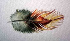 Rooster Feather Watercolor - Phoenix Rooster Feather Study 257 - Original Watercolor Nightly Study October 29th