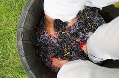 ♥♥50+ ROMANTIC ADVENTURES FOR COUPLES♥♥  Go Grape Stomping in California's Wine Country