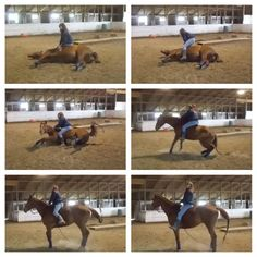 My wonderful quarter horse Payson knows how to lay down on command. This is me sitting on him when he stands up :)