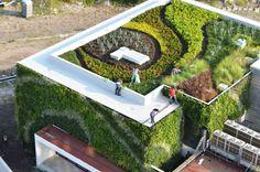 Zielone dachy, kompozycje ozdobne, skalniaki. GREEN-POL | Z miłości do piękna natury: zielone dachy, kompozycje ozdobne, choinki szlachetne, skalniaki. Nature Impact
