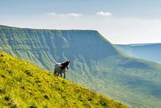 The park is located in mid-Wales in the UK was established in under the National Parks and Access to the Countryside Act of Cool Places To Visit, Places To Go, Wales Holiday, Snowdonia National Park, Visit Wales, Brecon Beacons, Cairngorms, Deciduous Trees, United Kingdom
