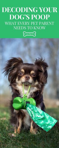 Decoding Your Dog's Poop: What Every Pet Parent Needs To Know | Dog Health | Dog Care Tips | Dog Health Tips, Dog Health Care, Dog Care Tips, Decoding, Dog Training Tips, Happy Dogs, Dog Mom, Dog Treats, Cute Puppies
