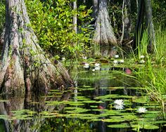 Okefenokee Swamp ( I did this trip for my husband, but it was beautiful)