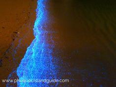 Bioluminescent Plankton phu quoc
