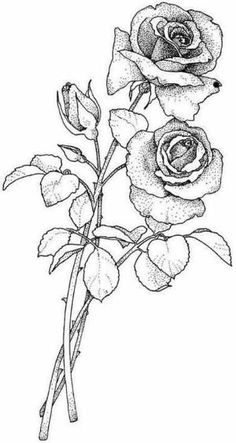 sketch of single rose stem - Yahoo Image Search Results Colouring Pages, Adult Coloring Pages, Coloring Books, Rose Sketch, Flower Sketches, Rose With Stem Drawing, Embroidery Patterns, Hand Embroidery, Mother's Day Colors
