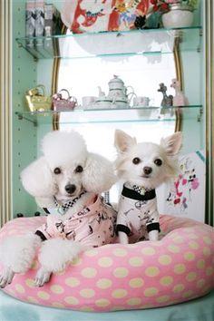 Fifi & Romeo. Modeled by Momo & Chilly. #dog fashion
