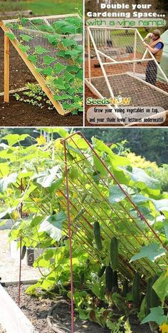 Double Your Gardening Space with a Vine Ramp – Grow Your Vining Vegetable on Top, and Your Shade Lovin's Lettuces Underneath diy garden projects 19 Successful Ways to Building DIY Trellis for Veggies and Fruits Veg Garden, Vegetable Garden Design, Fruit Garden, Vegetable Gardening, Vertical Vegetable Gardens, Veggie Gardens, Vegtable Garden Layout, Fenced Garden, Tomato Garden